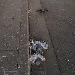 Taubenkadaver unter der Brücke der A 42 an der Altenessner Straße
